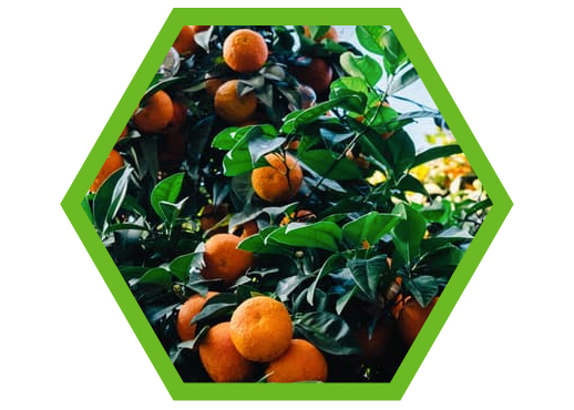 Post Harvest Technology Citrus images