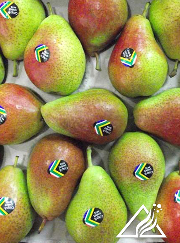 Forelle pears pre-harvest manipulations and post-harvest consumer acceptance research