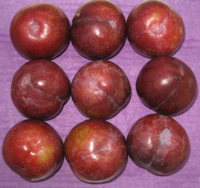 Post-harvest agricultural research forced-air cooling of plums