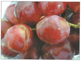 Post-harvest research on SO2 damage in table grapes