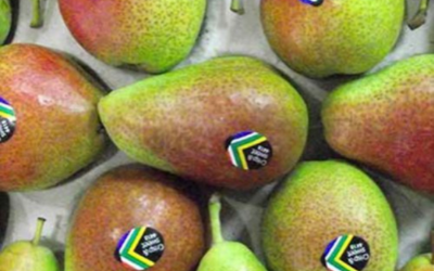 CONSUMER ACCEPTANCE STUDY OF EARLY MARKETED FORELLE PEARS IN THE UK & GERMANY