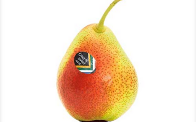 FORELLE PEARS: POST-HARVEST MANIPULATIONS TO ENABLE VERSATILE MARKETING