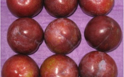 FORCED-AIR COOLING RECOMMENDATIONS FOR PLUMS